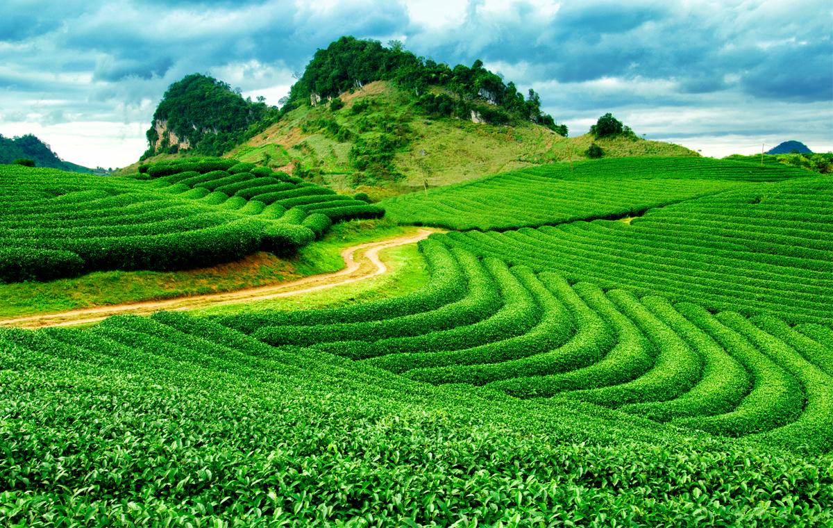 Plantações são obrigadas a serem levadas a lugares mais altos devido a mudanças climáticas