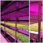 Hortas e fazendas verticais são alternativa na agricultura