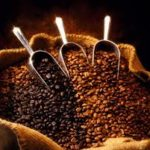 Produtividade é maior responsável pelo aumento da rentabilidade de café no Brasil
